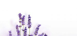 Bunch of Lavendar - Healthy Living with Hope