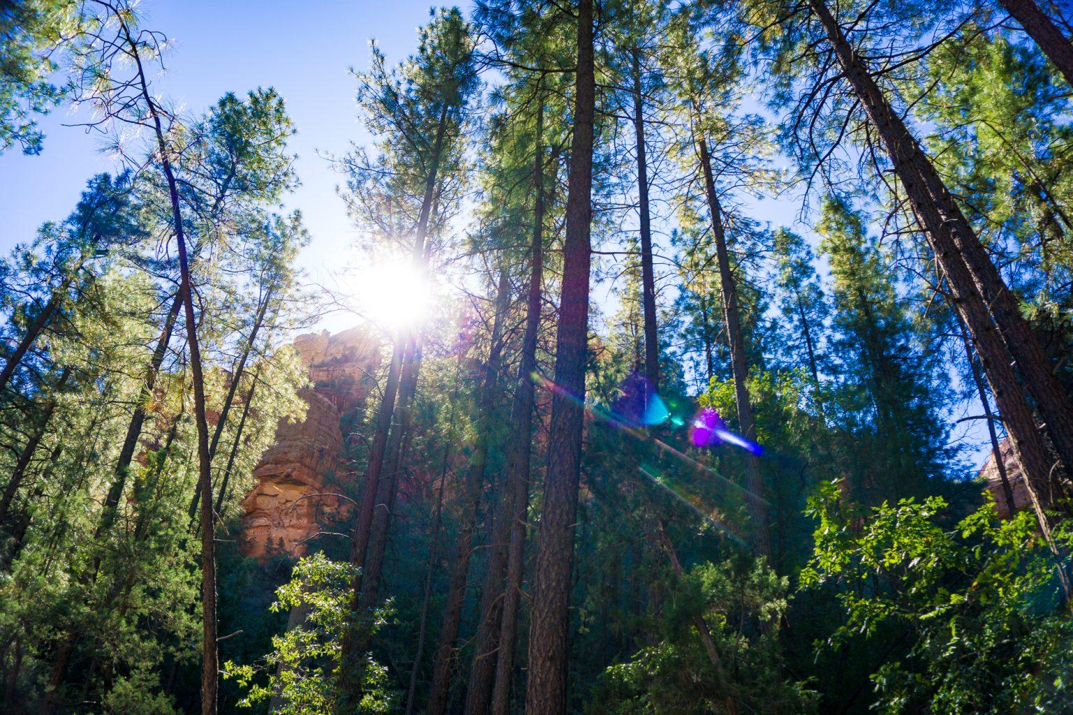 Sedona Arizona Forest